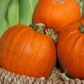autumn-2855_1920